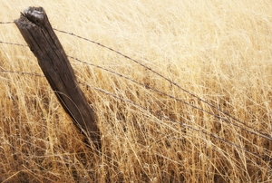 leaning fence post in grassy field
