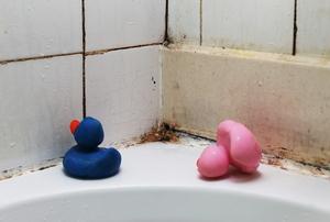 Moldy tiles and rubber duckies on a bathtub edge