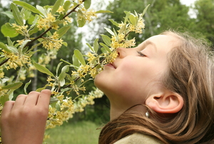 girl smelling flowers on a honeysuckle vine