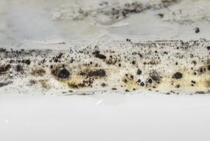 mold on caulking