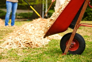 Wheelbarrow dumping some wood chips.