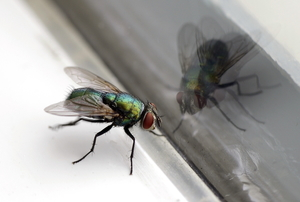 A fly at the edge of a closed window