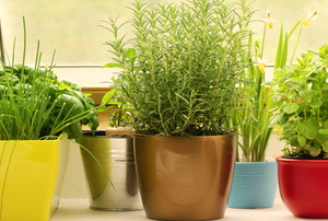 An herb garden in colorful pots in front of a window.