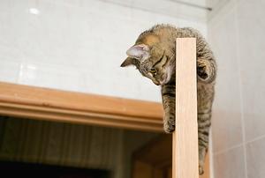 A cat scratching the top of a wooden door.