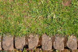 stone edging along green lawn