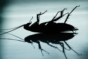 A silhouette of a dead cockroach on a reflective surface.