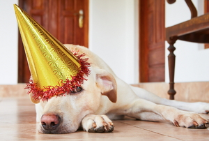 A dog laying on the floor with a birthday hat.