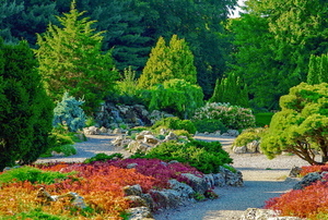 various evergreen trees with red bushes