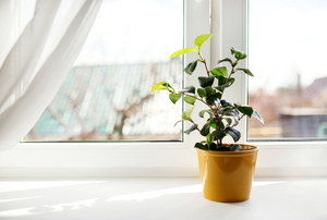 A plant in a yellow pot in front of a window with a curtain.