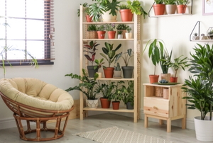 home space with bookshelf filled with house plants