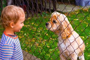 A little boy and a dog behind a chain link fence - face to face look.