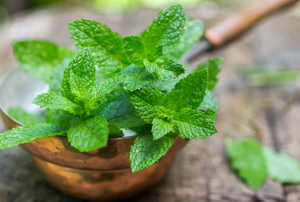 thriving mint leaves for natural pest control