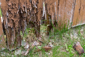 rotten wood fencing boards