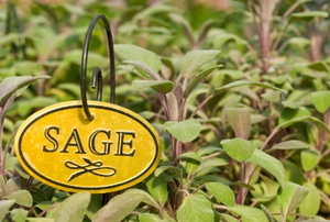 "A garden with a small, yellow sign reading ""sage""."