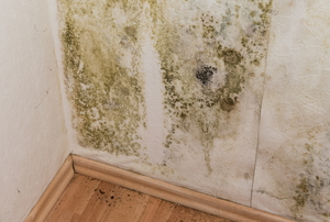 Extensive mildew growth on interior walls.