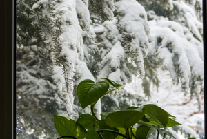 A houseplant in front of a window showing a snowy landscape.