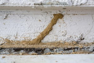 Termite tubes on the exterior of house.