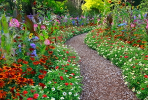 A woodchip pathway in a blooming flower garden.