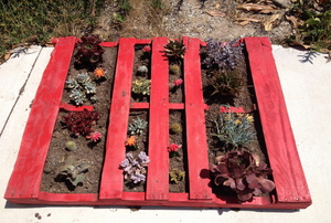 A succulent and cactus garden made from a shipping pallet.