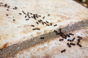 5 Pest Control Tips for Spring