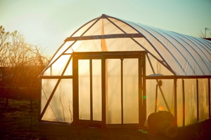 What to Consider Before Buying a Greenhouse