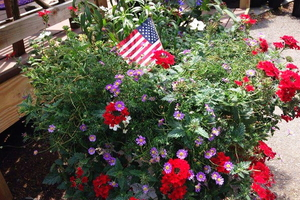 Make Your Own Red, White, and Blue Planter Arrangement!