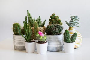How to Keep Houseplants Alive When You're Traveling
