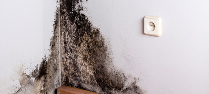 Stachybotrys Chartarum Or Black Mold Is A Type Of Fungi That Grows Naturally In Dark Damp Areas The Ideal Conditions For Growth Include High Humidity