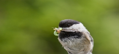 How to Attract Insect-eating Birds, Part 2 | DoItYourself com