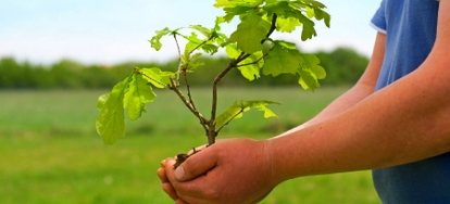 Home Renters Insurance >> Relocate and Transplant an Oak Tree | DoItYourself.com