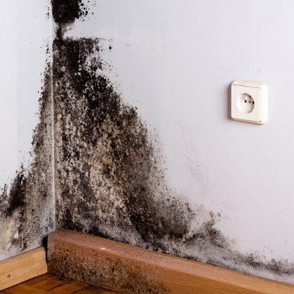 Common Mold vs  Black Mold | DoItYourself com