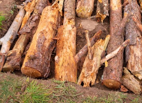 hugelkultur pile of wood and dirt