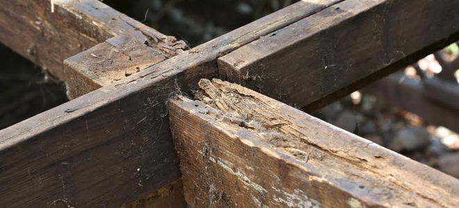 Terms Of The Trade What Is Dry Rot Doityourself Com