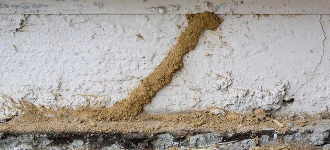 How To Seal A Termite Treatment Hole Doityourself Com