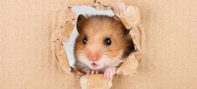 How to Make a Hamster Cage Escape-Proof | DoItYourself com