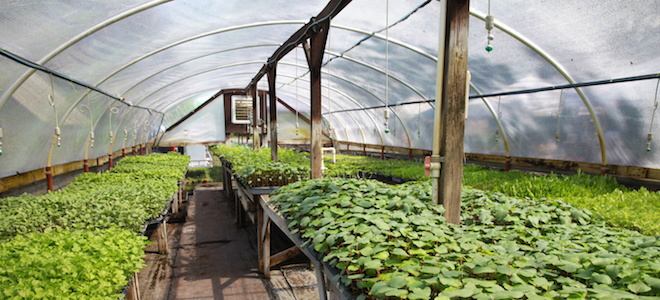 How to Control Your Greenhouse Climate | DoItYourself com