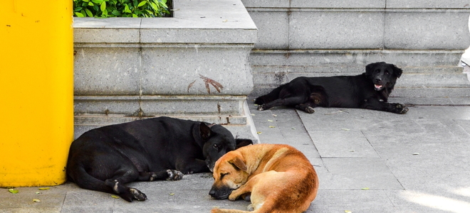 5 Best Pet Odor Removal Options for Concrete | DoItYourself com