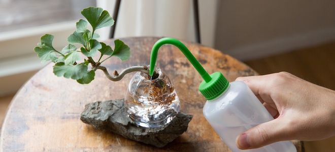 small bonsai tree in glass container with water on rock and wood table