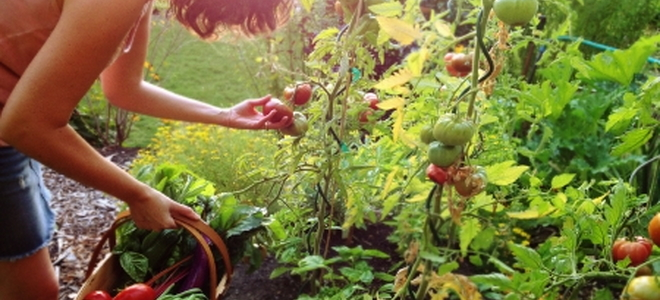 Answers To Vegetable Fruit And Herb Gardening Questions