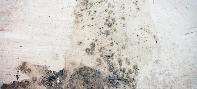 How To Prevent Mold Growth On Your Basement Ceiling