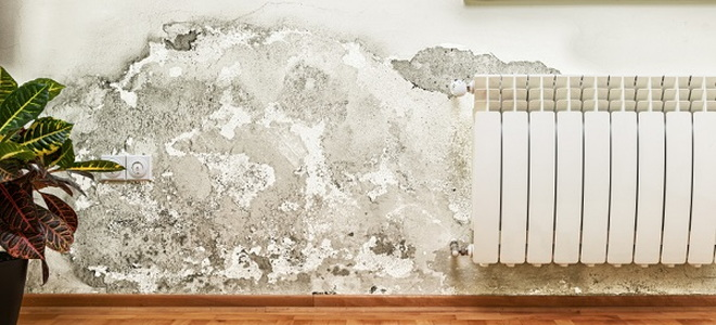 mold covering large portion of wall