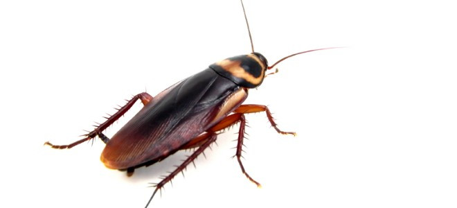 How To Get Rid Of Bugs In The Kitchen