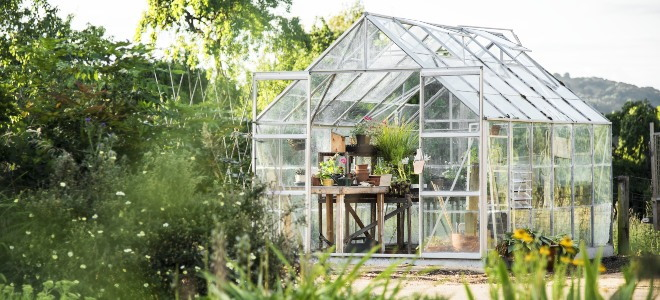 glass greenhouse in a yard with many green plants
