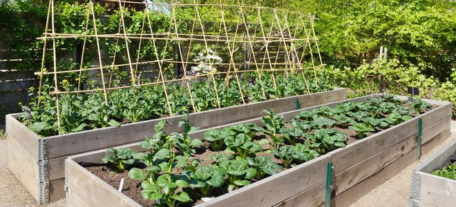 The best bang for your buck veggie gardening How do you keep rabbits out of your garden