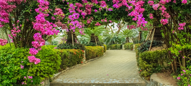 Mistakes To Avoid When Growing A Bougainvillea