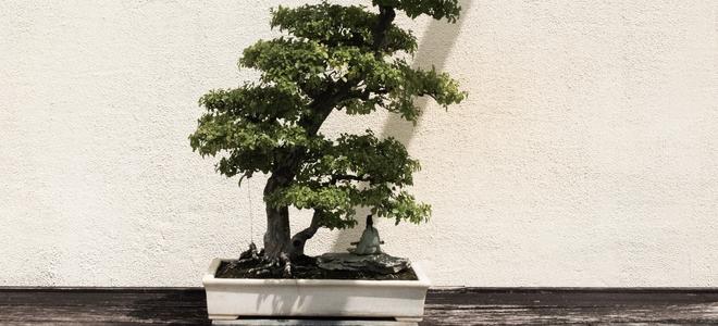 Beautiful bonsai outside