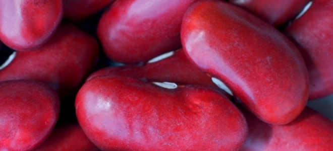 Grow Red Kidney Beans Doityourself Com