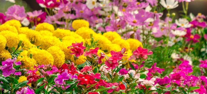 Instructions for transplanting perennial flowers doityourself among the most rewarding plants for your garden are perennial flowers and plants perennials do not have to be planted anew every year mightylinksfo