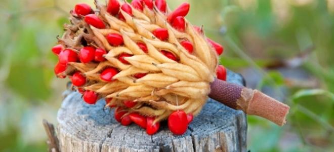 How To Grow A Magnolia Tree From Seeds Doityourself Com