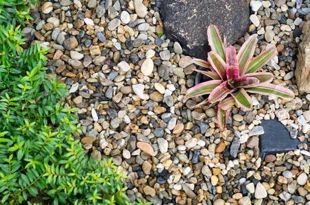 Outdoor Gardens Design Plants